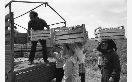 008_Loconsolo_1971 Raccoglitrici di pomodori - Copia.jpg