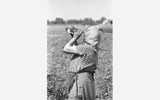 013_Loconsolo_1971 Raccoglitrice di pomodori.jpg