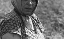 009_Loconsolo_1971 Raccoglitrice di pomodori.jpg