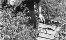 010_Loconsolo_1971 Raccoglitrice di pomodori.jpg