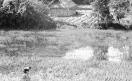 108_Loconsolo_1977 Vietnam, contadino, risaia.jpg